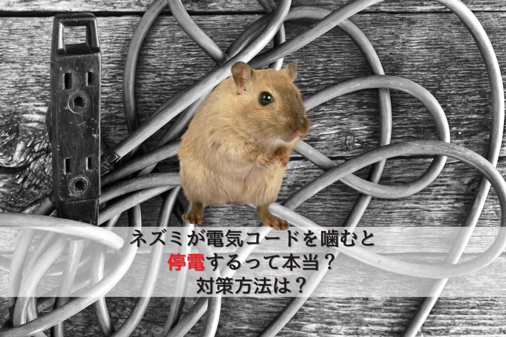 ネズミが電気コードを噛むと停電するって本当?対策方法は?
