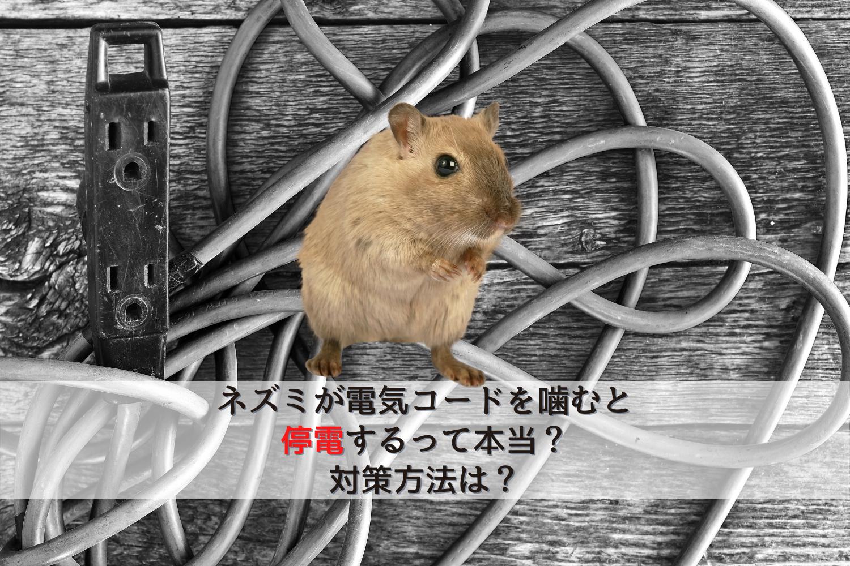 ネズミ電気コード