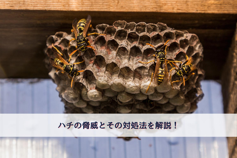 WPIC-ハチの脅威