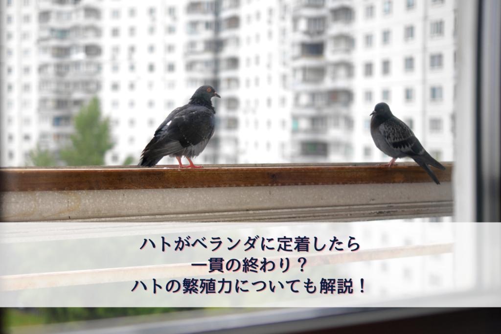 ハトがベランダに定着したら一貫の終わり?ハトの繁殖力についても解説!