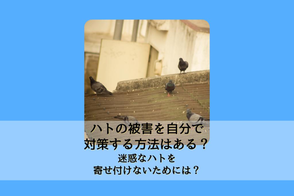 ハトの被害を自分で対策する方法はある?迷惑なハトを寄せ付けないためには?