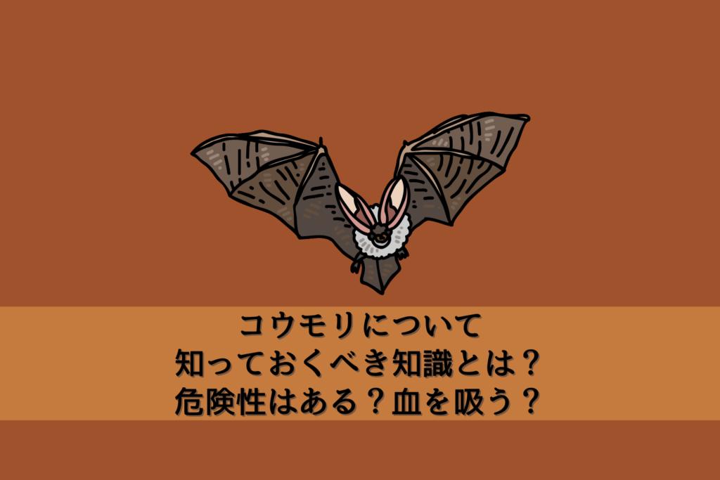 コウモリについて知っておくべき知識とは?危険性はある?血を吸う?