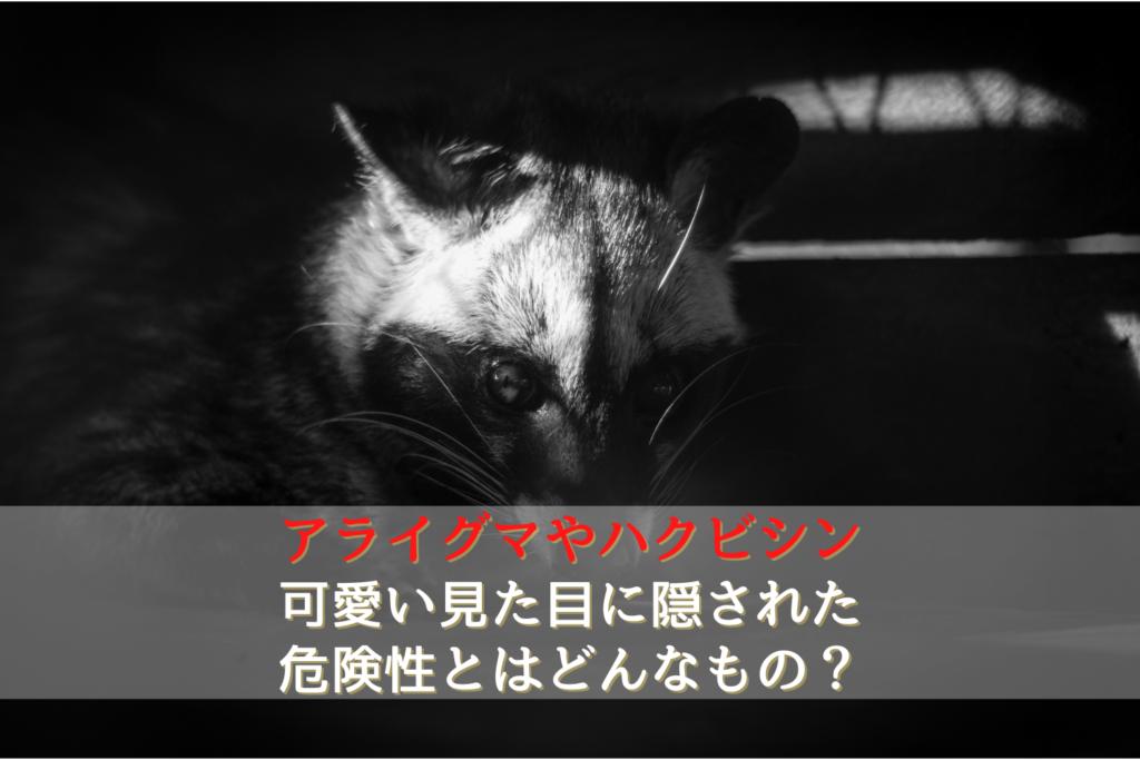 アライグマやハクビシンの可愛い見た目に隠された危険性