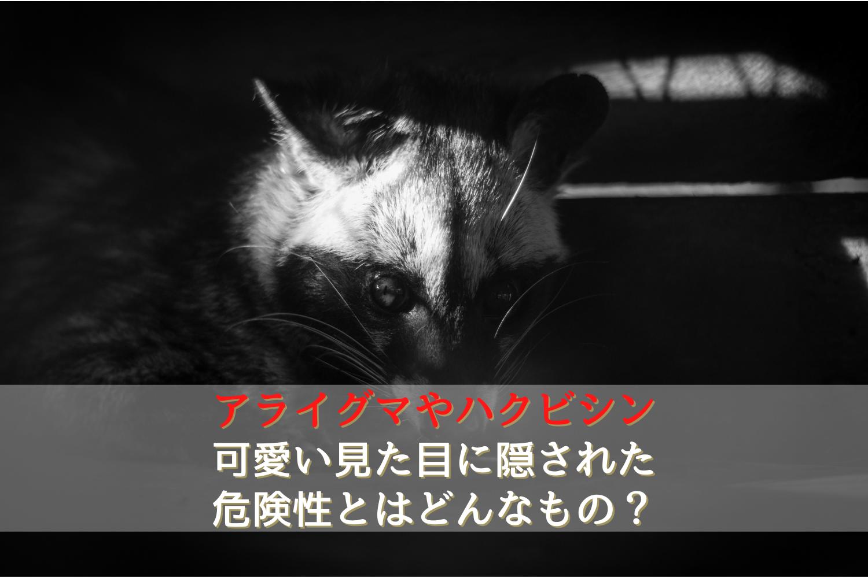 アライグマとハクビシンの被害