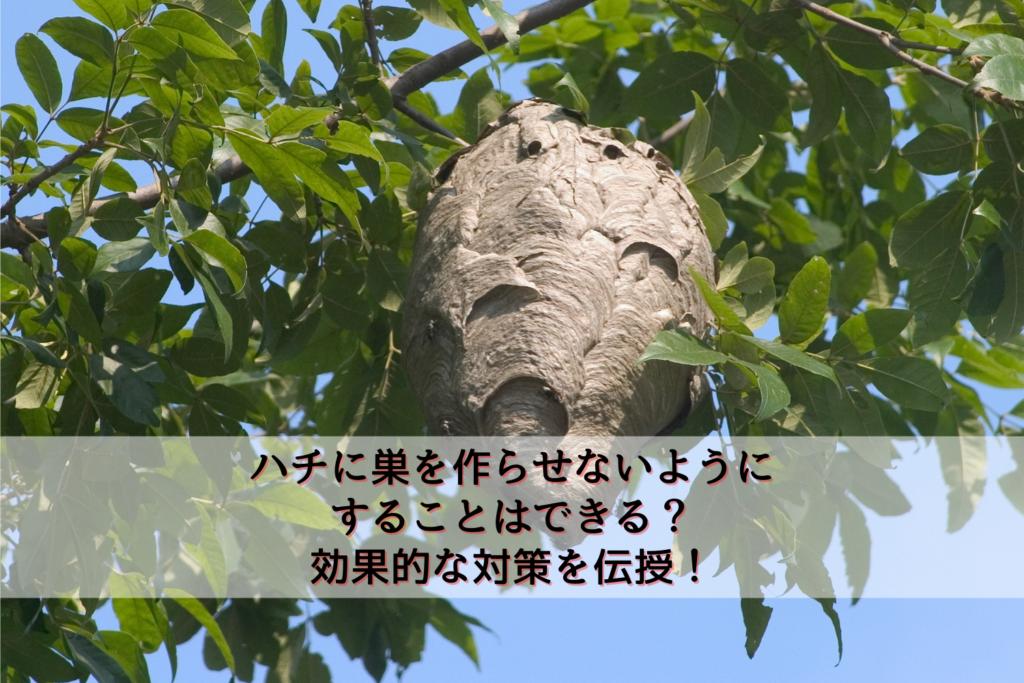 ハチに巣を作らせないようにすることはできる?効果的な対策を伝授!