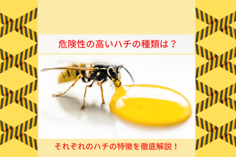 ハチの危険性