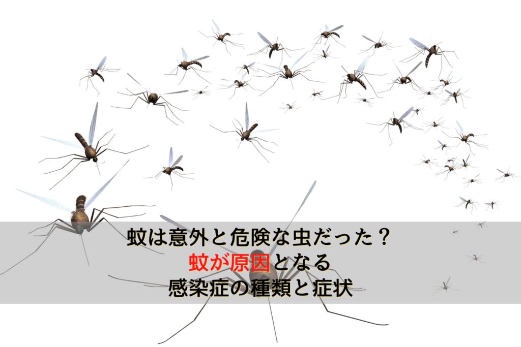 蚊は意外と危険な虫だった?蚊が原因となる感染症の種類と症状