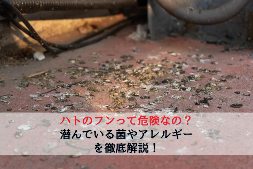 ハトのフンって危険なの?潜んでいる菌やアレルギーを徹底解説!