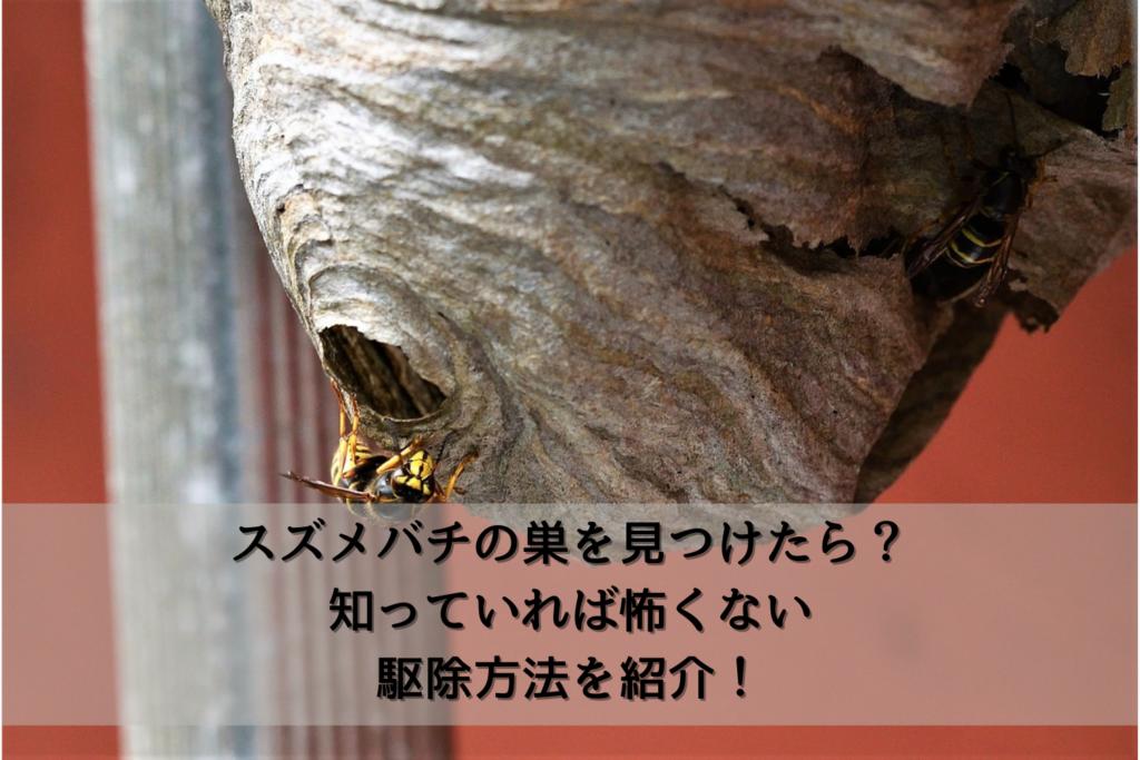 スズメバチの巣を見つけたら?知っていれば怖くない駆除方法を紹介!