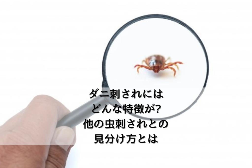 ダニ刺されにはどんな特徴がある?他の虫刺されとの見分け方とは