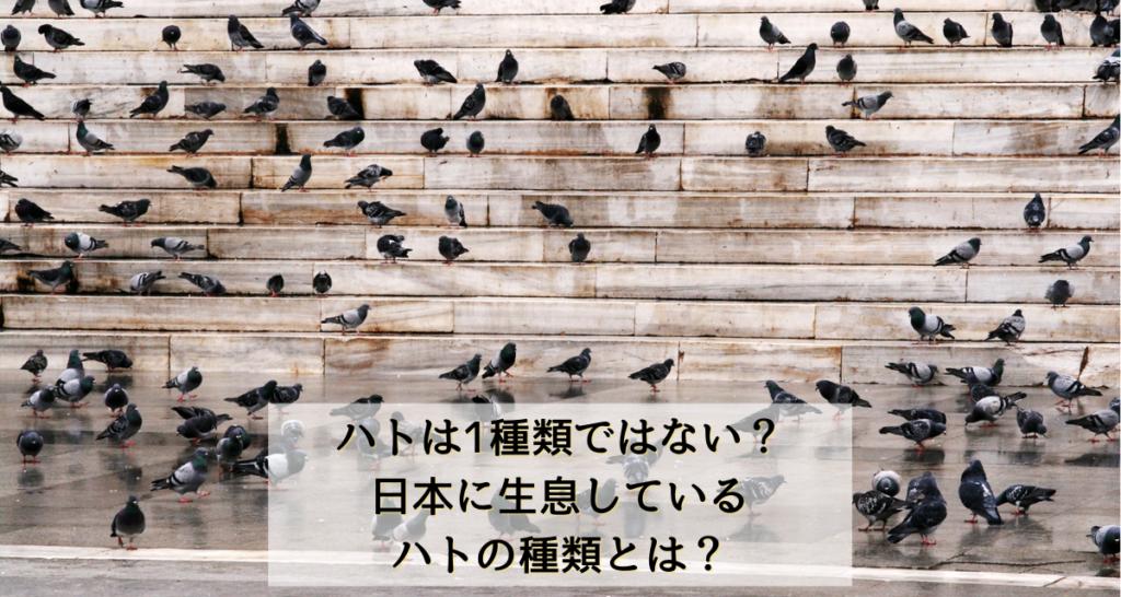 ハトは1種類ではない?日本に生息しているハトの種類とは?