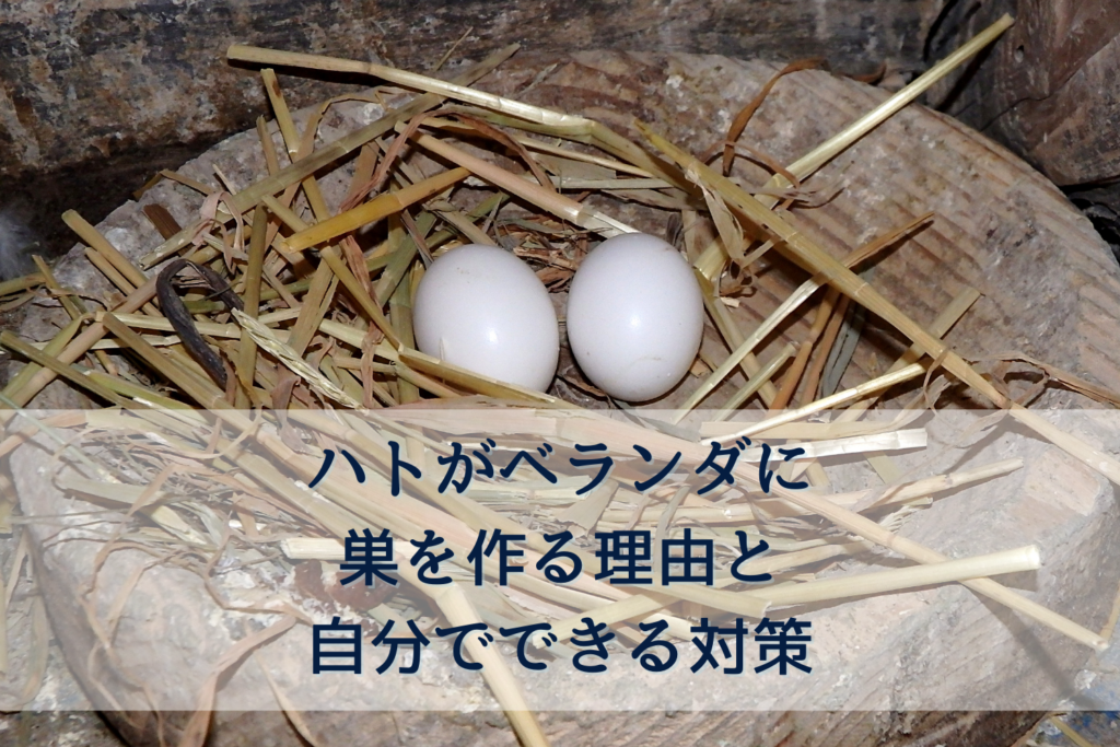 ハトがベランダに巣を作る理由と自分でできる対策